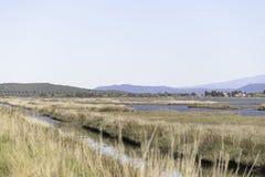 Paisagens da reserva natural de Diaccia Botrona Imagem de Stock Royalty Free