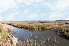 Paisagens da reserva natural de Diaccia Botrona Imagens de Stock Royalty Free