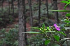 Paisagens das flores nas montanhas e nas florestas Foto de Stock Royalty Free
