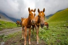 Paisagens de Georgia Nature Mountain Fotos de Stock