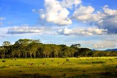 Paisagens de Nakuru Imagem de Stock