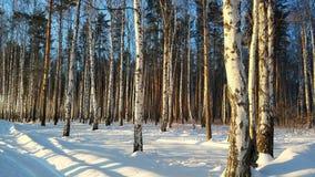 Paisagens do inverno na floresta de Ural em um dia ensolarado fotografia de stock