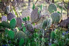 Paisagens do sul de texas da natureza no por do sol perto da cidade l do salgueiro Foto de Stock