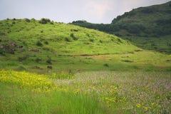 Paisagens e prados flowery fotografia de stock