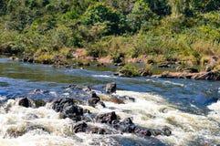Paisagens em torno do pinho de montanha Ridge Forest Reserve, Belize foto de stock royalty free