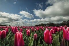 Paisagens nos Países Baixos, paisagens holandesas fotografia de stock