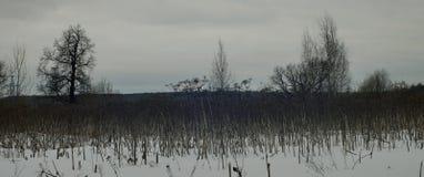 Paisaje, árboles y troncos del invierno hogweed Fotografía de archivo libre de regalías