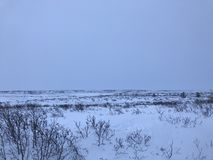 Paisaje ártico de la tundra Foto de archivo