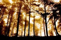 Paisaje Imagen de archivo libre de regalías