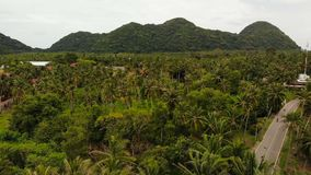 Paisaje aéreo de la isla de la opinión del abejón, plantaciones de la palma de coco, Tailandia Escena idílica natural del paraíso almacen de metraje de vídeo