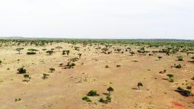 Paisaje a?reo del prado de la sabana de la cantidad en el parque nacional de Serengeti Viaje del safari a trav?s de la sabana afr almacen de metraje de vídeo
