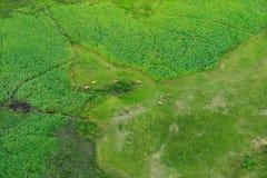 Paisaje aéreo en el delta de Okavango, Botswana Lagos y ríos, visión desde el aeroplano Vegetación verde en Suráfrica Árboles con foto de archivo libre de regalías