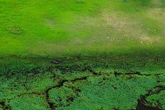 Paisaje aéreo en el delta de Okavango, Botswana Lagos y ríos, visión desde el aeroplano Vegetación verde en Suráfrica Árboles con foto de archivo