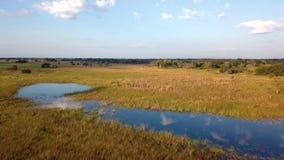 Paisaje aéreo, pantano de Mamili en Namibia septentrional almacen de video