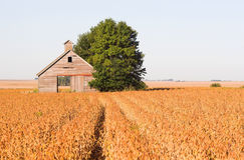 Paisaje abandonado del campo del granero y de la soja Imágenes de archivo libres de regalías
