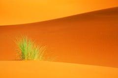 Paisaje abstracto de Sáhara Imágenes de archivo libres de regalías