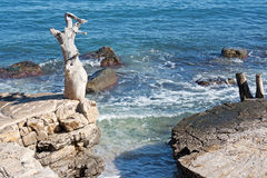 Paisaje adriático de la costa Imágenes de archivo libres de regalías