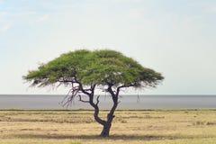 Paisaje africano Fotografía de archivo libre de regalías