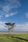 Paisaje africano Imagenes de archivo