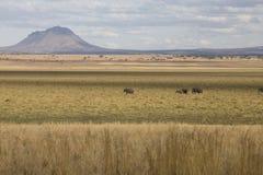 Paisaje africano con el volcán y los elefantes Fotografía de archivo libre de regalías