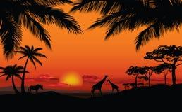 Paisaje africano con la silueta animal Backgro de la puesta del sol de la sabana Fotografía de archivo libre de regalías