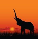 Paisaje africano con la silueta animal Backgro de la puesta del sol de la sabana Fotografía de archivo