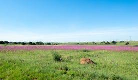 Paisaje africano de la flor salvaje, reserva de naturaleza de Rietvlei imagenes de archivo