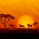 Paisaje africano, siluetas de cebras en fondo de la puesta del sol Fotos de archivo