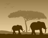 Paisaje africano y elefantes Fotos de archivo libres de regalías