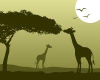 Paisaje africano y jirafas Fotos de archivo