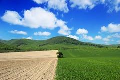 Paisaje agrícola con el cielo azul Imágenes de archivo libres de regalías