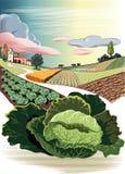 Paisaje agrícola, con la col ilustración del vector