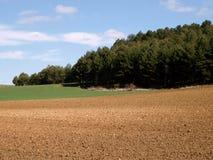 Paisaje agrícola con los árboles y el cielo azul brillante Fotografía de archivo