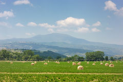 Paisaje agrícola de las balas de heno Foto de archivo libre de regalías