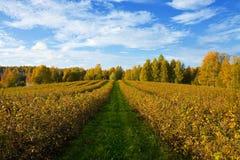 Paisaje agrícola del otoño Foto de archivo libre de regalías
