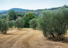 Paisaje agrícola en Toscana Fotografía de archivo