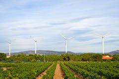 Paisaje agrícola encendido al sur de Francia Fotografía de archivo libre de regalías