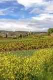 Paisaje agrícola hermoso de mayo con las plantas de la mostaza, los viñedos y el pueblo de Ventosa en La Rioja, España en la dist fotos de archivo