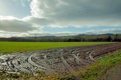 Paisaje agrícola mojado en el campo Fotografía de archivo libre de regalías