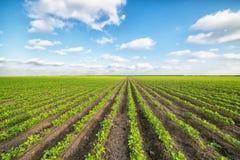 Paisaje agrícola verde y cielo azul Imagenes de archivo