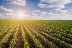 Paisaje agrícola verde y cielo azul Imagen de archivo