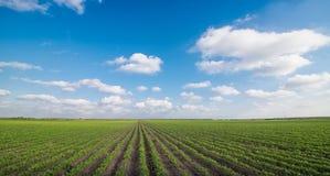 Paisaje agrícola verde y cielo azul Fotos de archivo libres de regalías