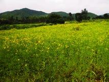 Paisaje agradable del bosque y verdor de las colinas foto de archivo
