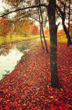 Paisaje agradable del otoño, tonos del vintage Fotografía de archivo