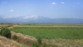 Paisaje agrario Foto de archivo libre de regalías