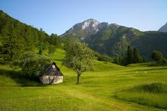 Paisaje alpestre con la hierba verde Fotografía de archivo libre de regalías