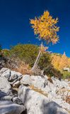 Paisaje alpestre del otoño fotografía de archivo