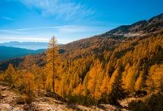 Paisaje alpestre del otoño fotografía de archivo libre de regalías