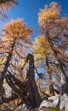 Paisaje alpestre del otoño imagen de archivo