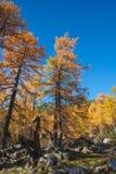 Paisaje alpestre del otoño fotos de archivo libres de regalías